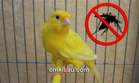 tips mencegah dan mengatasi gigitan nyamuk pada kenari