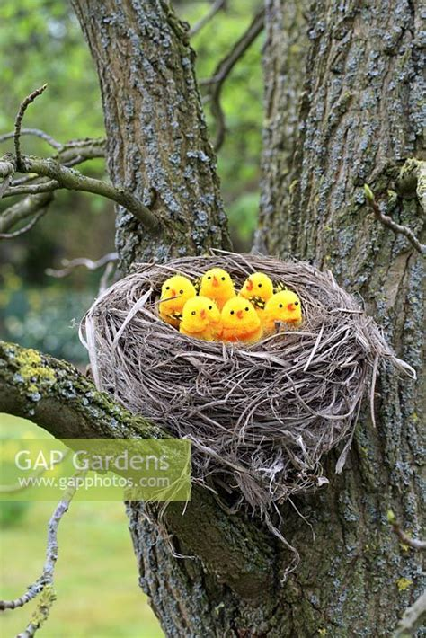 birds nest in tree gap gardens artificial birds in nest in tree image no