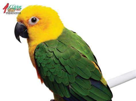 Parrot L parrot l avian plusl avian plus