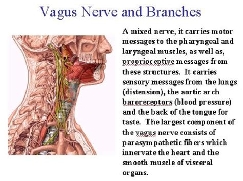 accessing the healing power of the vagus nerve self help exercises for anxiety depression and autism books 187 memory loss and senility how to understand and prevent