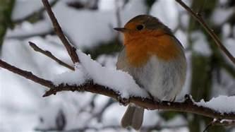 winter birds desktop wallpapers wallmaya com