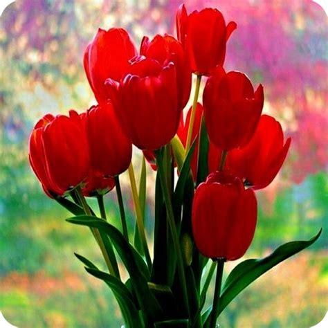 imagenes de flores exoticas para descargar ramos de flores preciosos para dedicar ver imagenes bonitas