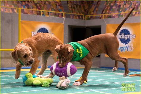 puppy bowl 2017 live puppy bowl 2017 meet the dogs the more photo 3853414 2017