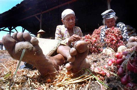 Bawang Merah Kulit Brebes pemerintah ajak petani nelayan ikut revolusi e commerce