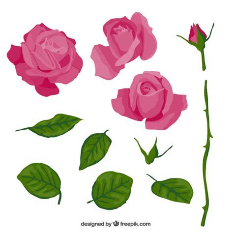 American De Rosa L Parts by Rosa De Color Rosa En Partes Descargar Vectores Gratis