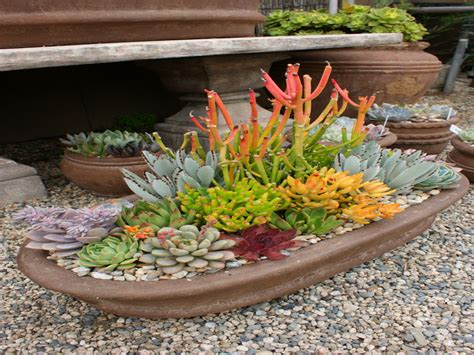 planting succulents outdoors designing a succulent garden
