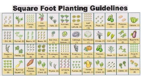 Garden Spacing by Square Foot Gardening Plant Spacing Sle Ft 2 Garden