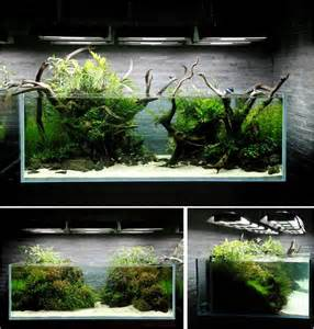 aquascape aquarium ideas