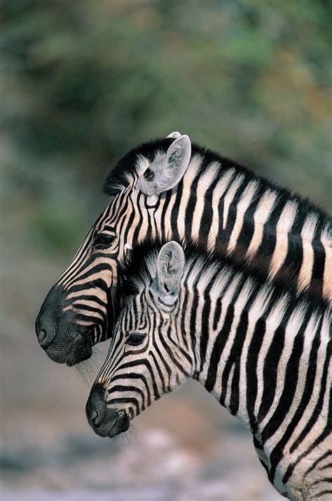 imagenes sensoriales y animicas las 25 mejores ideas sobre animales salvajes en pinterest