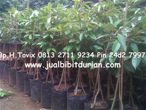 Harga Bibit Durian Musang King 2 Meter durian duri hitam durian musang king durian bawor