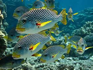 Photos   Related Tropical Fish Tank Background Fish Tank Background Hd
