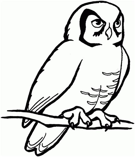 realistic owl coloring page free printable owl coloring pages for kids