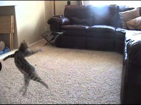 How To Stop My Cat From Pooping On The Couch Yahoo Answers