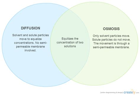 diffusion and osmosis venn diagram diffusion vs osmosis venn diagram creately