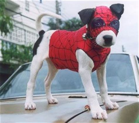 puppy spider the world s catalogue of ideas
