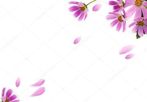 fiori cornici cornice di fiori foto stock 169 fidaolga 51850479