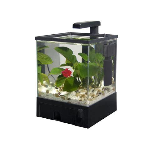 aquascape shop aquascape shop hygrophila polysperma indischer wasserfreund flowgrow aquabox led