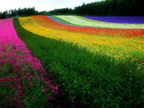 nature wallpaper hd colorful rainbow flowers hd wallpaper art nature colorful free