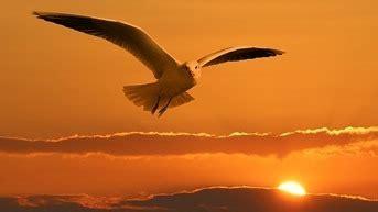 gabbiano uccello assolo di poesia il volo di un gabbiano