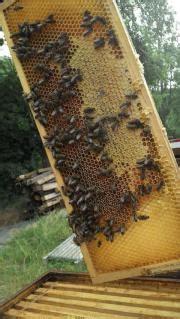 unsere bienen suchen ein zuhause imkerpaar sucht garten z