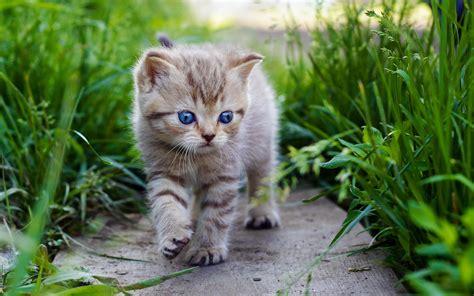 cute baby cats hd wallpaper
