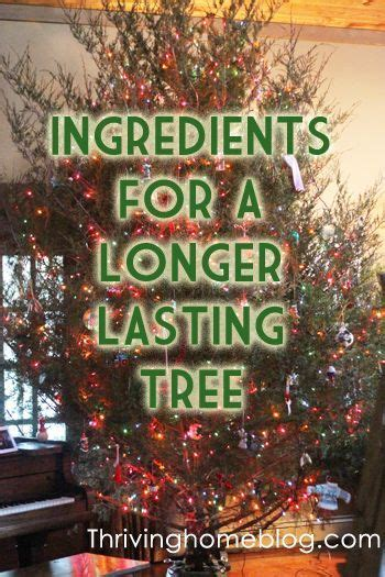 add to xmas tree water best 25 tree water ideas on tree table decorations advent