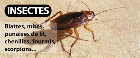 d 233 sinsectisation anti blattes cafards punaises de lit