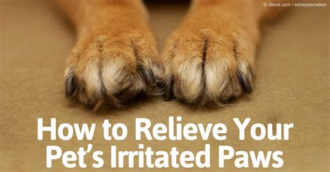 irritated paws irritated pet paws how to relieve your pets irritated paws autos post