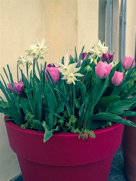 vasi per bulbi come coltivare i bulbi in vaso per la primavera e l estate