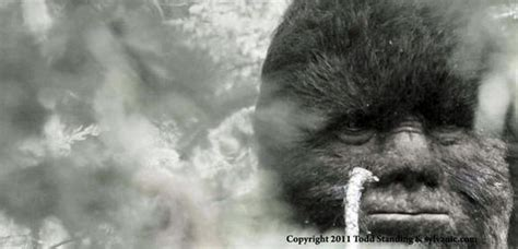 bigfoot west coast a history of gorillas and other monsters in california oregon and washington state books bigfoot in the canadian rockies photos coast to coast am