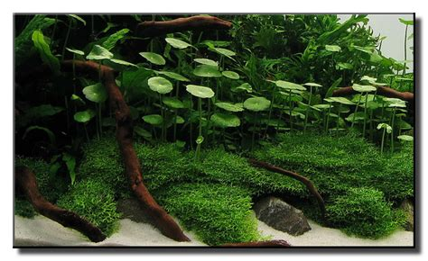 aquascape plants aquascape of the month october 2009 quot little green hill quot aquascaping world forum