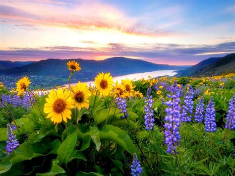 spring flowers mountain lake hills red cloud sunset hd