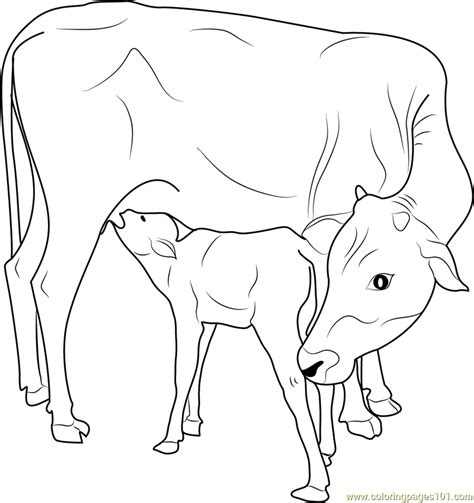 indian   calf coloring page  coloring pages