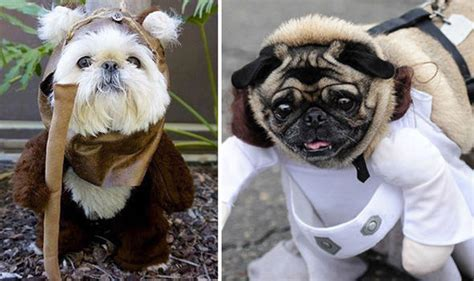 wars pug costume these dogs dressed as wars characters are barking mad entertainment
