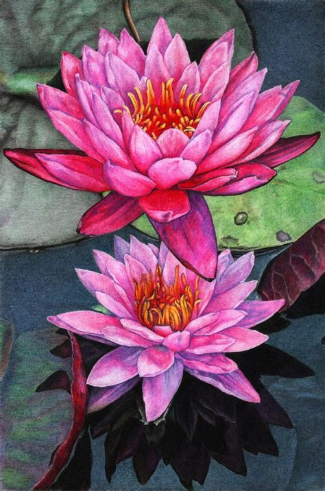 lotus colors lotus by naglets on deviantart colored pencil in