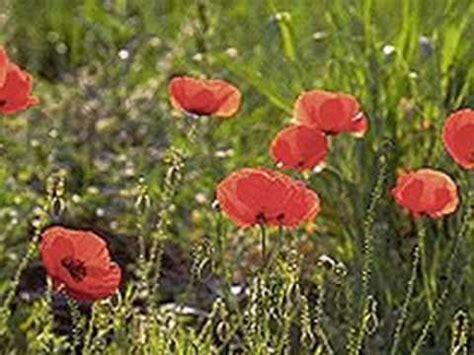 sfiorisci bel fiore enzo jannacci sfiorisci bel fiore wmv