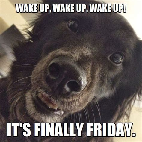 Dog Friday Meme - wake up it s finally friday meme puppy dog animal