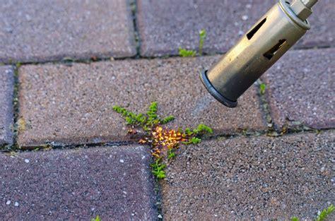 Moos Zwischen Pflastersteinen Beseitigen 6762 moos entfernen auf terrasse und gehweg 5 tipps