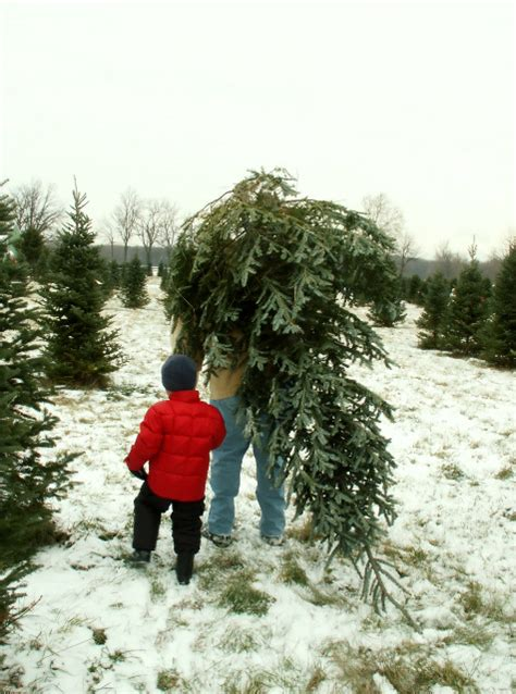 christmas tree farms in orange county ca