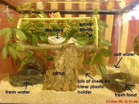 Hermit Crab Heat L by Best 20 Hermit Crab Tank Ideas On Hermit Crab Cage Hermit Crabs And Hermit Crab
