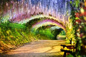 Flower Tunnel by Wisteria Flower Tunnel Path Bench Fence