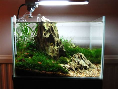 aquascape nano quot mono quot nano iwagumi with crystal red shrimp 12x10x8