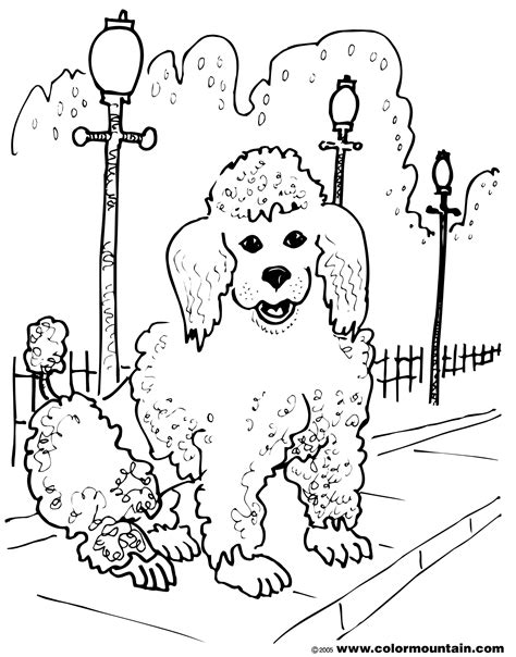 poodle puppy coloring page free coloring pages of poodle toy