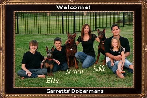 doberman puppies cost garrett s dobermans puppy site