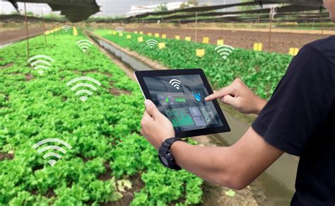 iot  agriculture  technology   smart farming