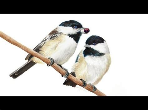 watercolor tutorial chickadee 11 best watercolor chickadee images on pinterest