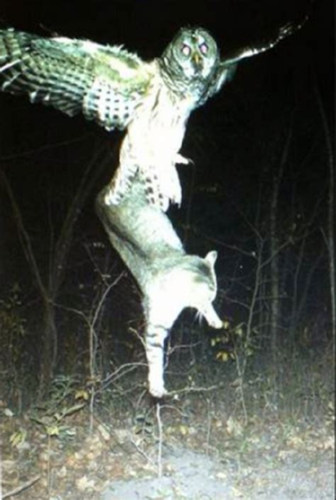 Draw My Own House Plans by 30 Best Trail Cam Photos That Will Never Be Recorded Again
