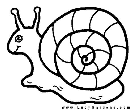 garden snail coloring page coloring book flowers outline snail coloring page snail