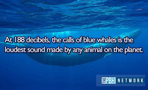 10 amazing facts about ocean animals 10 pics amazing