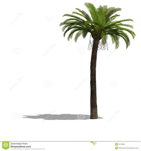 Forest Render palme tree royalty free stock photo image 9715905